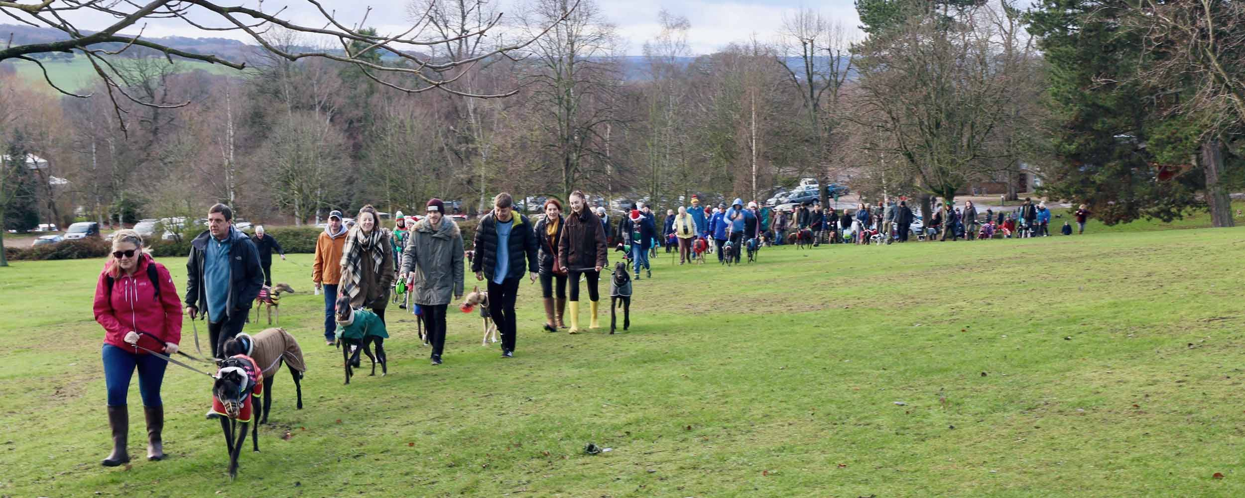 Santa Paws walk at Yorkshire Sculpture Park