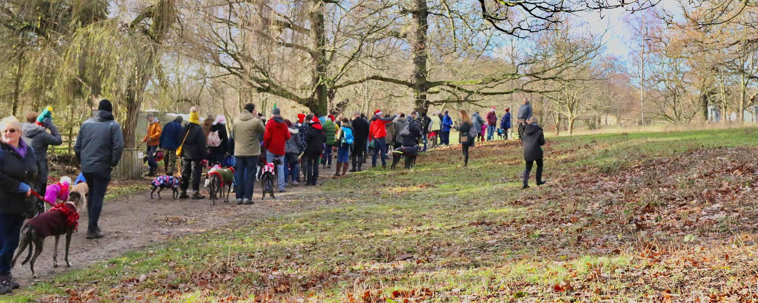 Sighthound Walks at Yorkshire Sculpture Park
